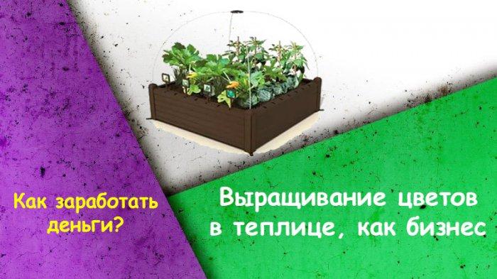 Выращивание цветов в теплице, как бизнес