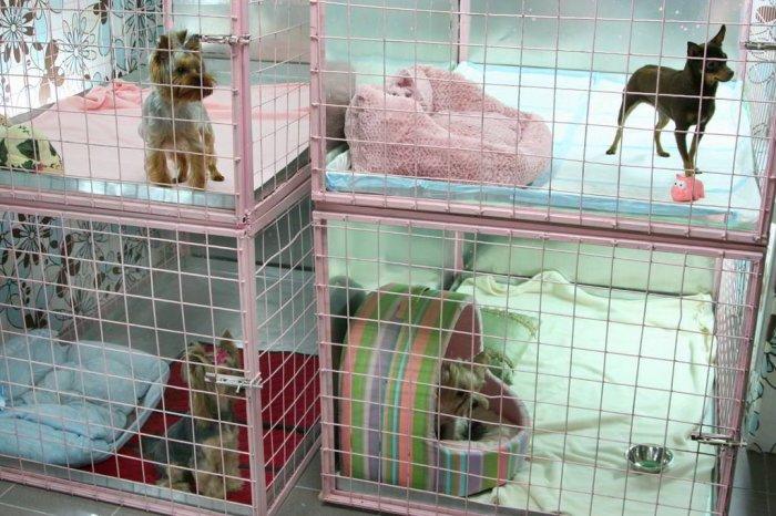 Гостиница для животных, как перспективная идея для бизнеса