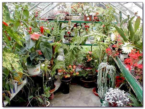 Выращивание экзотических растений