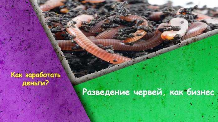 Разведение червей Бизнес план 2020