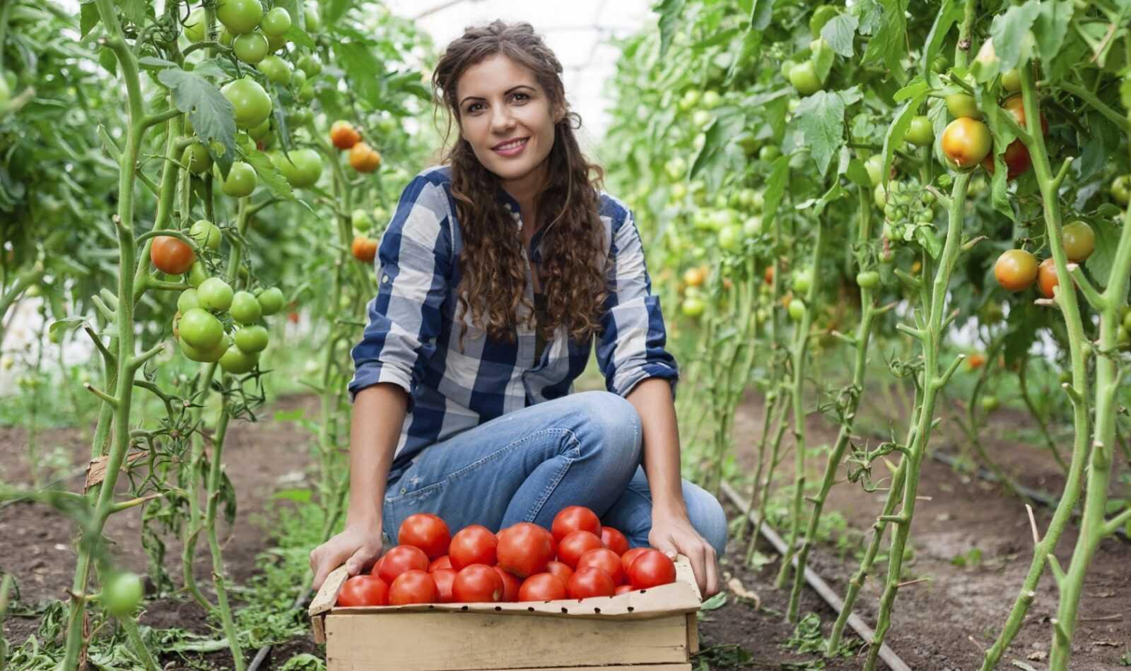 Выращивание овощей, зелени и фруктов